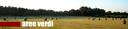Campo di grano - cover