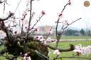 Giardino Campagna - locandina
