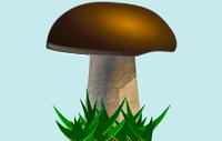 Divieto di raccolta dei funghi epigei spontanei nei castagneti da frutto in attualità di coltura - Anno 2021