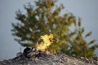 Fino al 30 aprile 2021 vietato bruciare i residui vegetali dei lavori agricoli e forestali